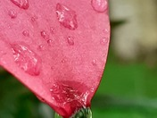 Reflections in a raindrop