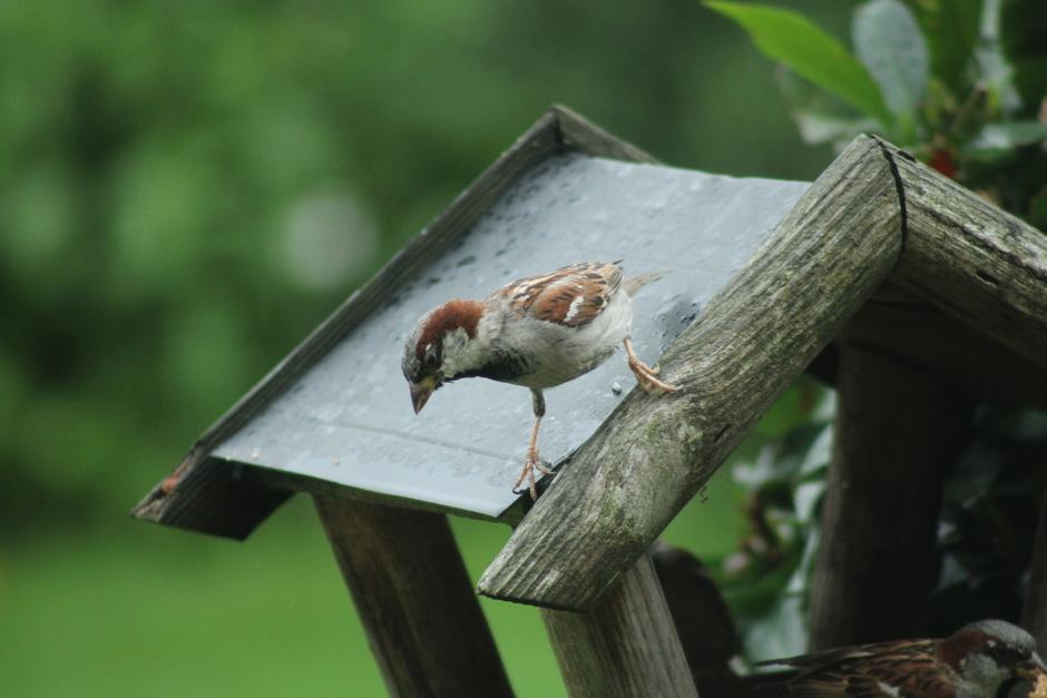 Musje op het dak van het vogelhuisje