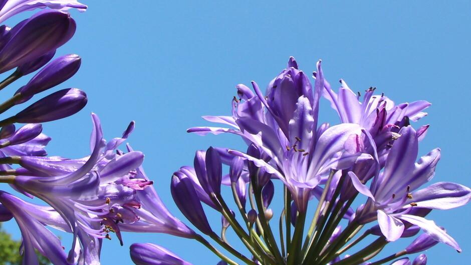 De lucht kleurt diep blauw vandaag