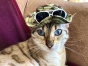 Cool cat Bengie