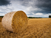 Round Hay Bale at Harvest Time - Project 52 - 'Summer'