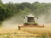 Harvesting the Barley in Waldringfield Suffolk