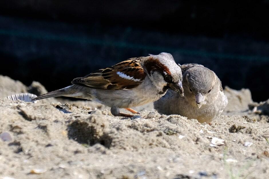 samen zandgebakjes eten