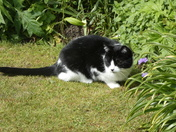 Sasha enjoying the sun in our garden