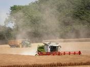 Oil seed rape harvesting begins in Rattlesden.