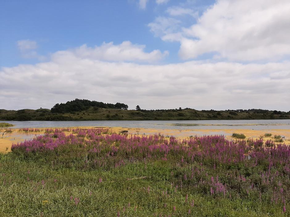 Prachtige bloemen bij het Vogelmeer in de duinen