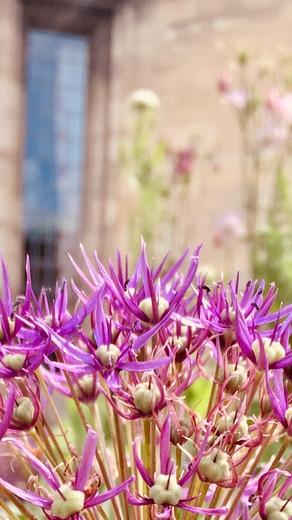 Norwich bloom