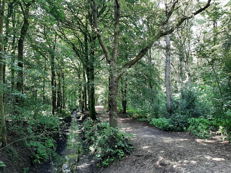 Prima weer voor een wandeling in het bos