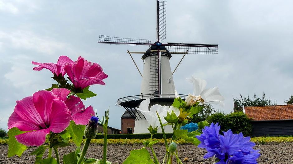 Wolken zon en zomerbloemen