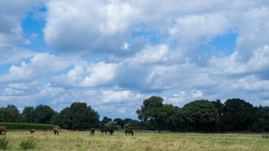 Wolkenlucht en paarden