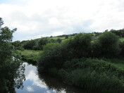 Reflections on the River Culm, from B3181, Cullompton.