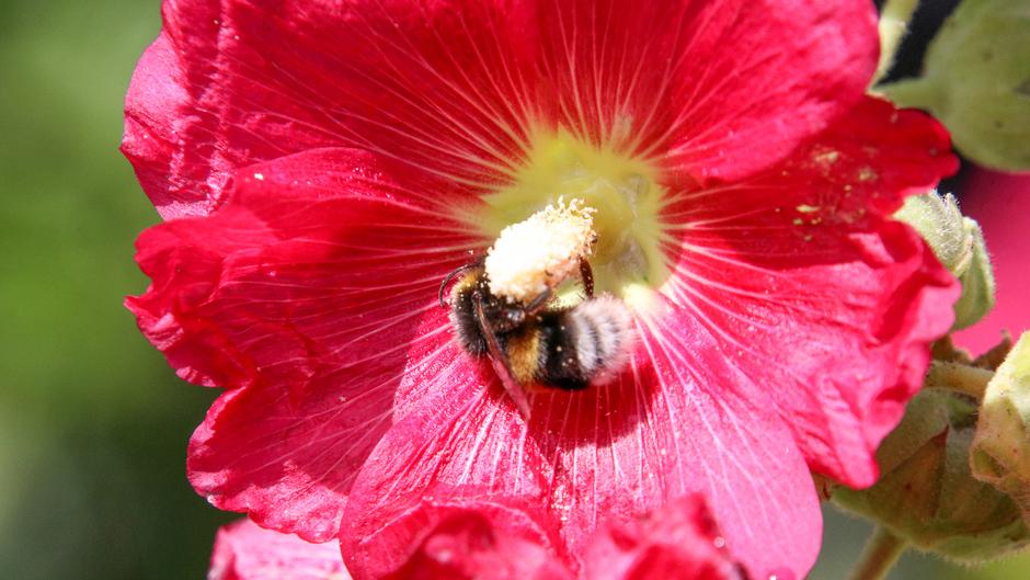 Hmm lekker nectar
