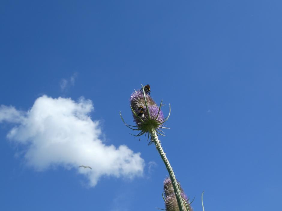 Blauwe lucht en vriendelijke stapelwolken