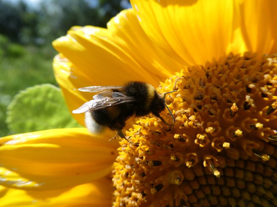 Op pollenjacht