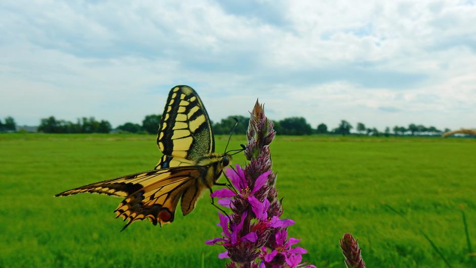 Somber, geen echt vlinderweer, maar toch!