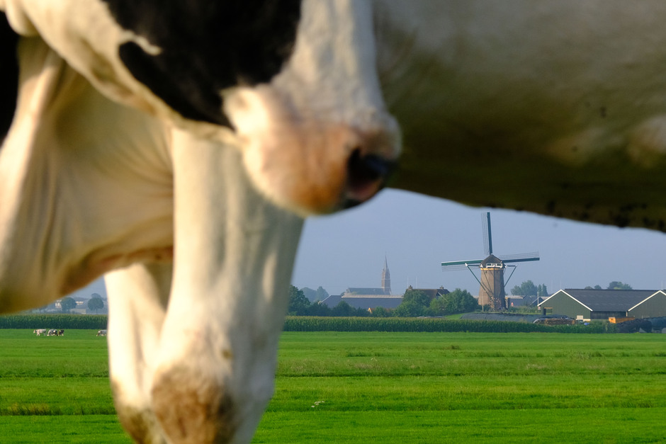 vanonder een koe
