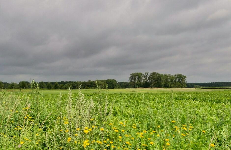 Bewolkte zondagochtend in ZO-Limburg