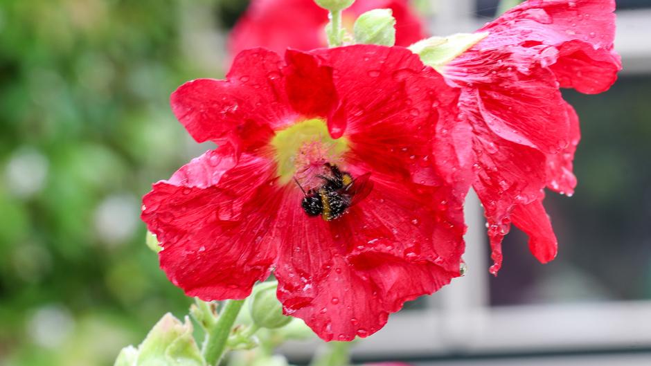 Bijtje onder de nectar
