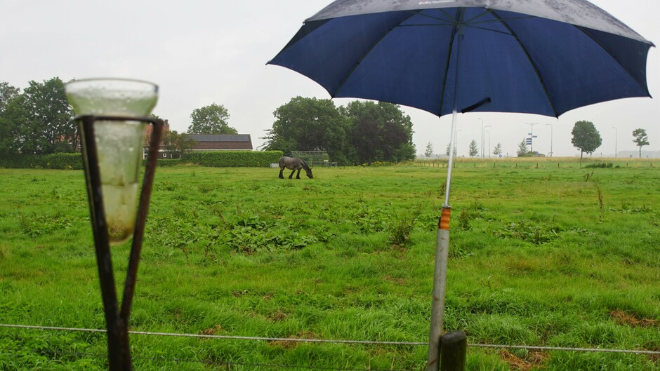grijs en regenachtig paraplu weer 7 mm geregend vanmorgen 17 gr