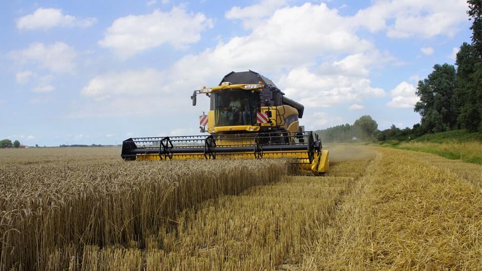 zon blauw wolken tarwe oogst weer begonnen droog 21 gr
