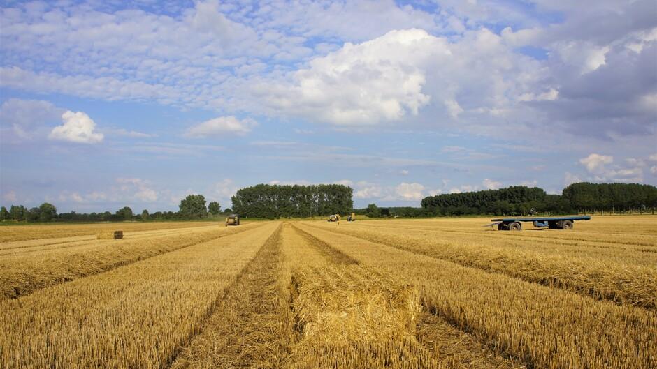 zon blauw wolken tarwe stro persen grote balen 22 gr gehele dag droog