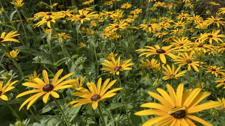 Zon-nige bloemen