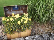 Treasure from Sidmouth in Bloom