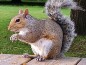 Feeding squirrels in Clarence Park