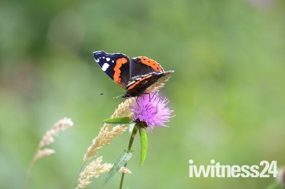 Butterflies at Bradfield Woods