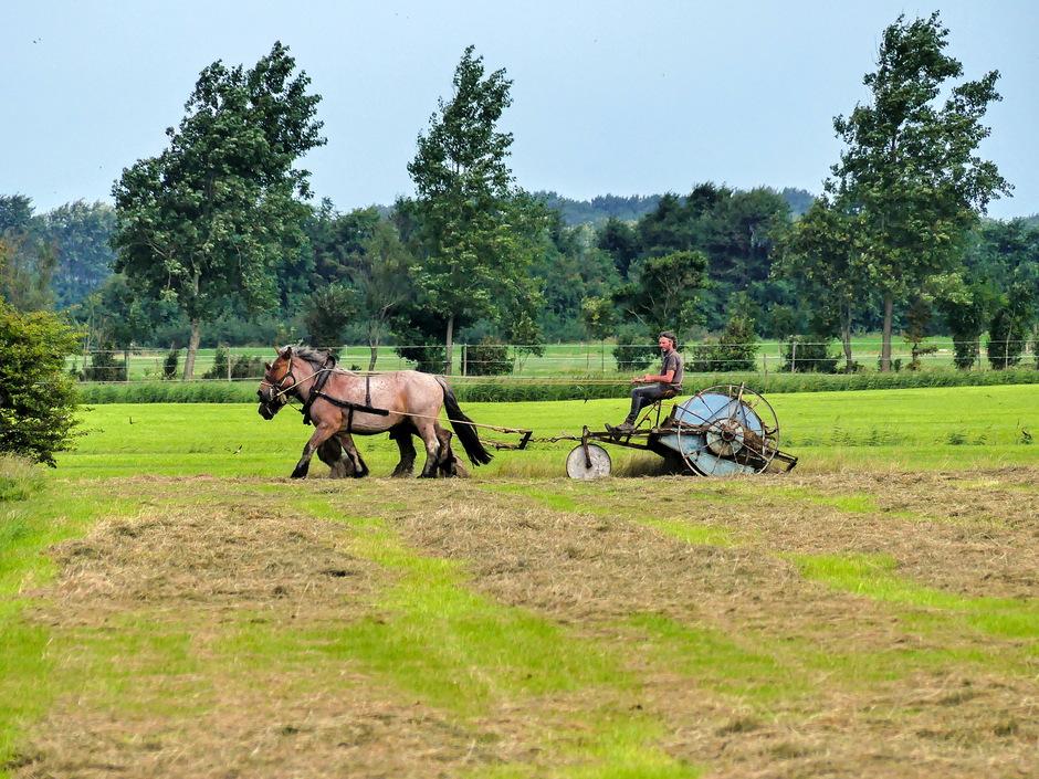 Graskeren met trekpaarden
