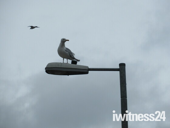 Seagull ontop of the lamppost