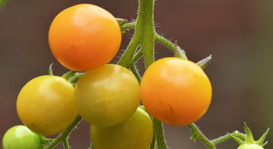 Tja, en toch hebben mijn tomaatjes nog wel een beetje zon nodig.