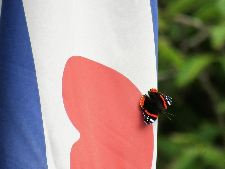 Vlinder op onze Friese Vlag