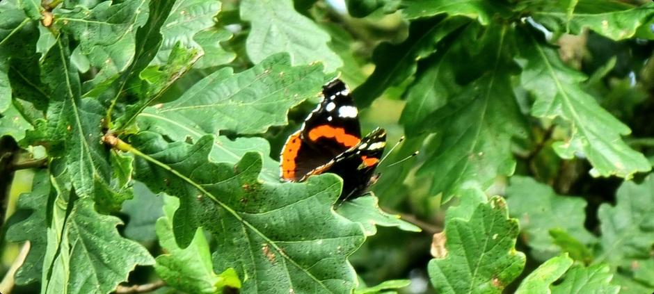 Vlindertuin fughelhelling