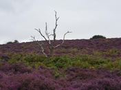 Day amongst the heather