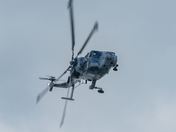 Wildcat at Sidmouth