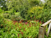 GARDENS IN BLOOM AT SCULTHORPE MILL