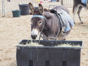 Weston Donkeys