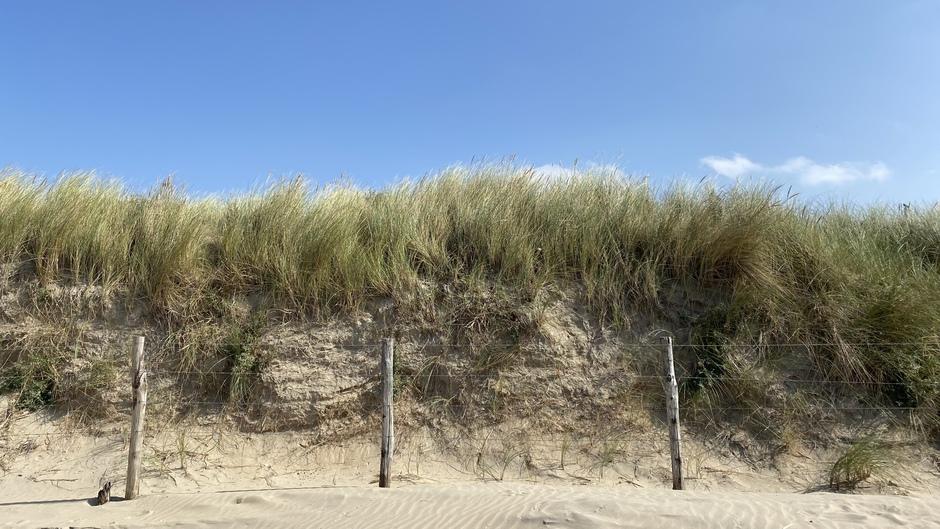 Mooie duinen