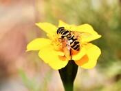 Late Summer Garden Wildlife