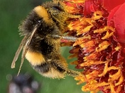 Hungry bumble