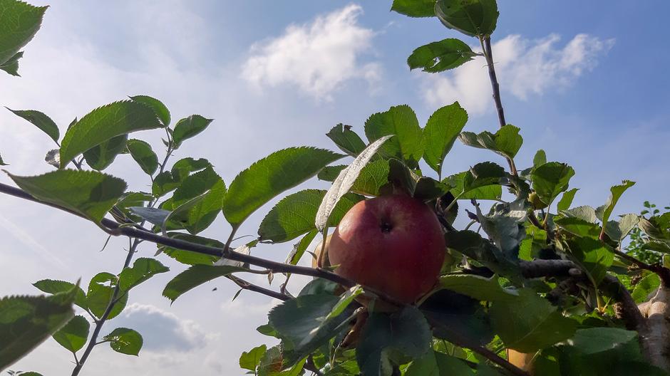 Grote appels dit jaar