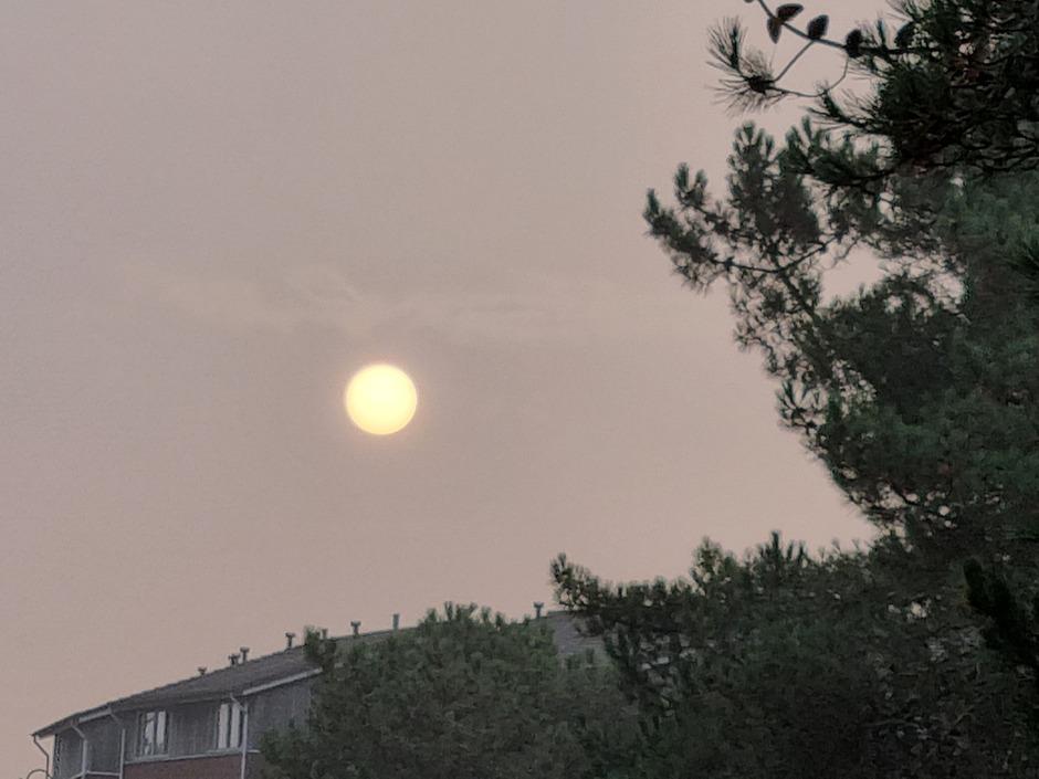 Grote heldere zon in mist