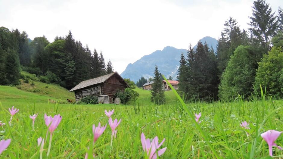 Alpen: bewolkt, later buien
