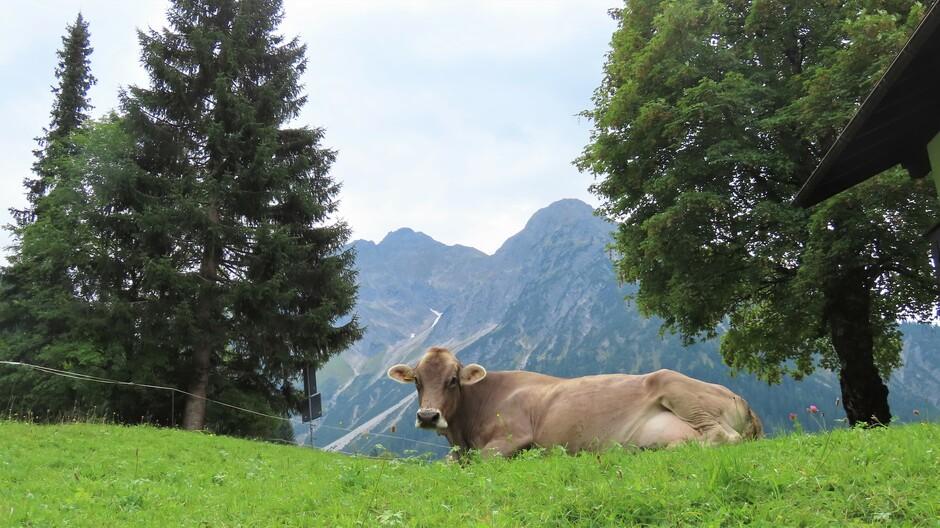Alpen: droog maar bewolkt (vanavond buien)