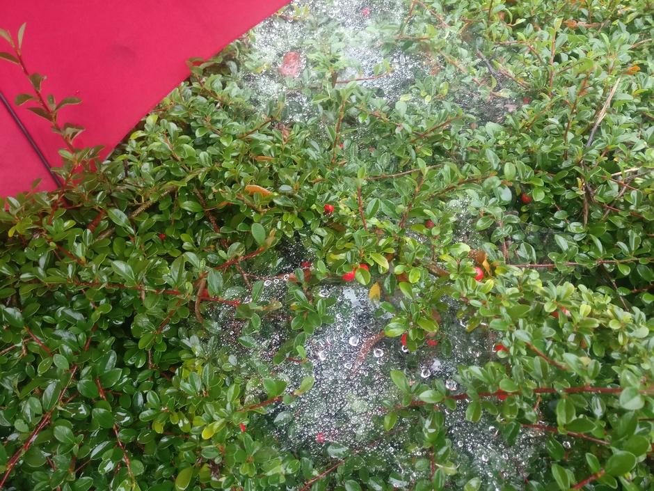 Web van regendruppels