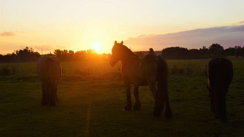 zonsopkomst iets bewolkt 16 gr paarden in de wei