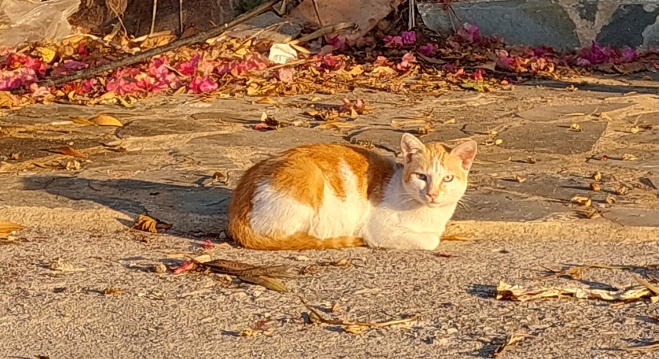 Rond 08.00 uur al flink zonnig op Zakynthos