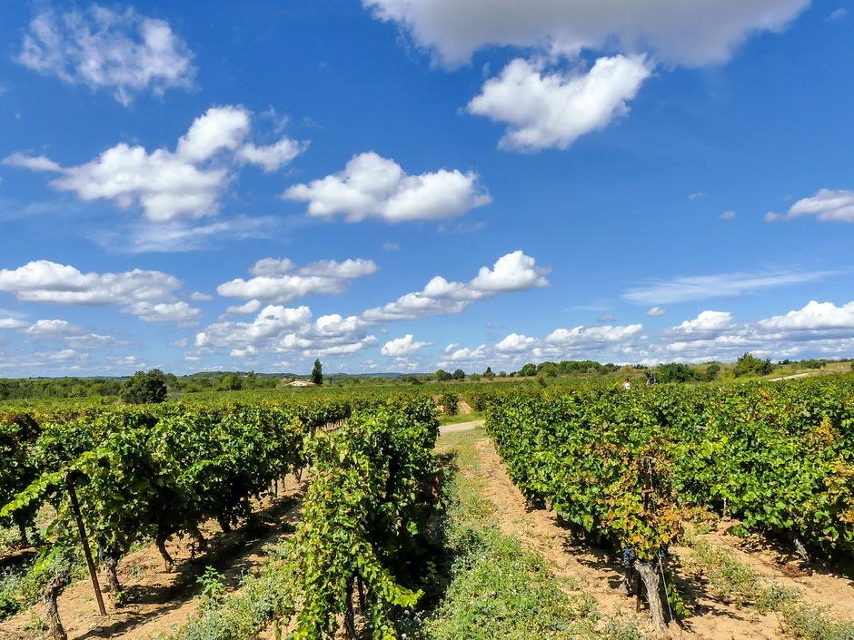 Zonovergotendag vriendelijke wolken wijnvelden