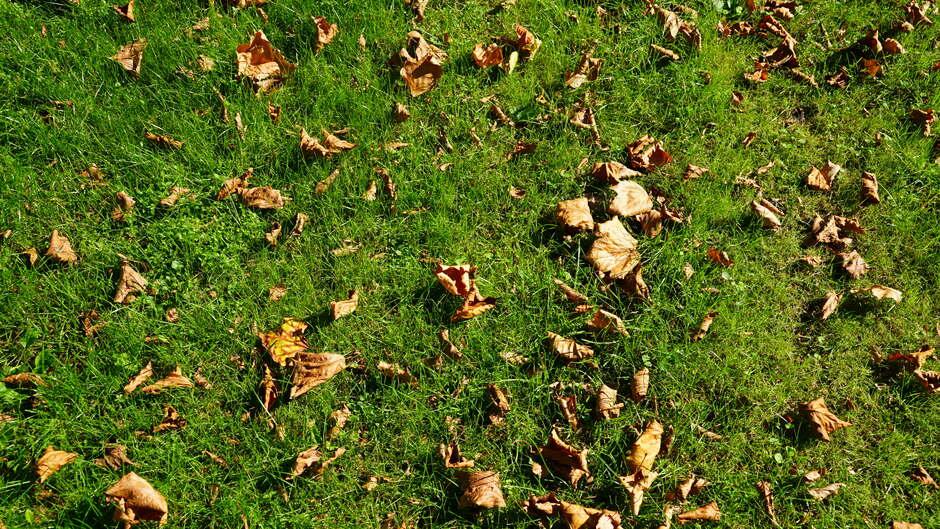 Herfstblaadjes in het gras.